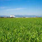 【自然農法】土作り作業手順7ステップ & ポイント4つ